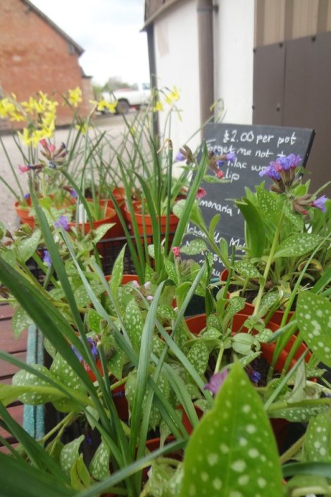 Buy a new companion - plants for sale.
