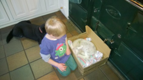 Our first lamb needing special heat treatment by the aga, watched over by his new friends.