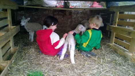 More lamb love from the kids