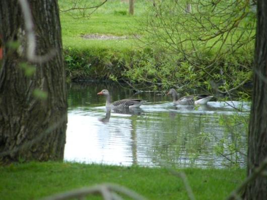 Duck Pont