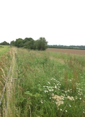 11.07.16 Grassland