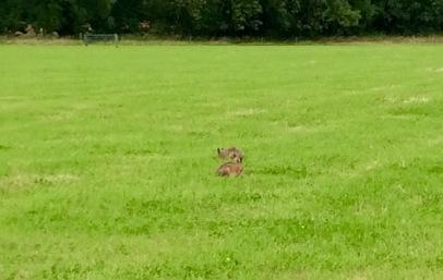 11.07.16 hared