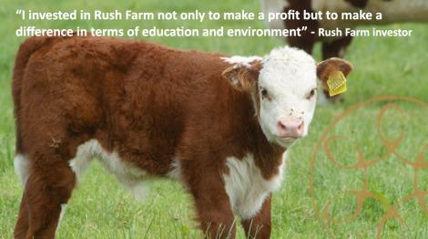 photo-campaign-calf