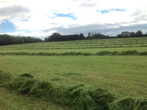 cutting for haylage.jpg