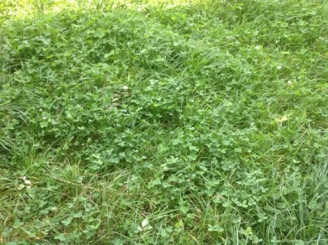 good pasture