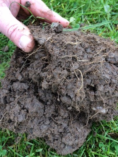 good soil rooting